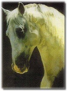 Andalusian Stallion: EMBAJADOR IX; � Original Oil Painting by Susan Dorazio