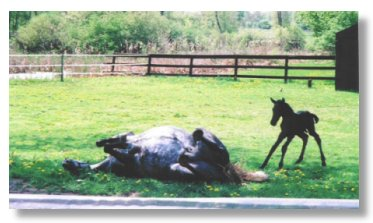 Spanish-Norman mare Mi Vida Isabeau and 2001 foal, sired by Elixir TG