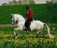 Katharina Fehring on Andalusian stallion orgulloso XL, imported from Spain